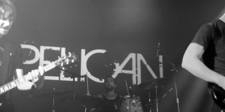 pelicann (11)