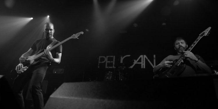 pelicann (8)
