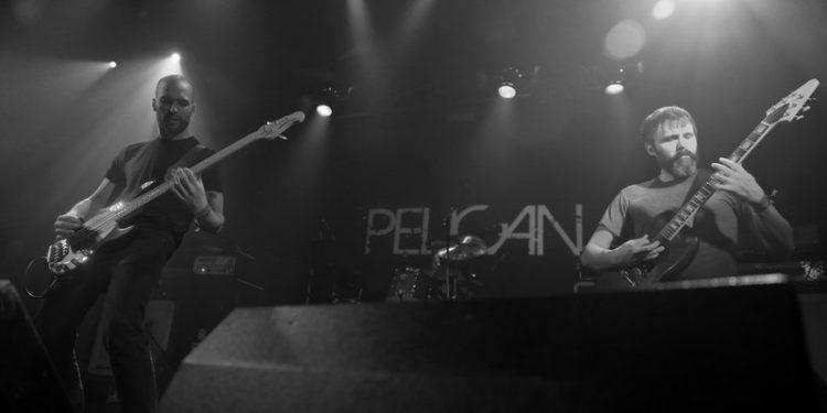 pelicann (9)